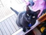 Black Cat enjoying the calm